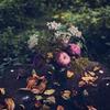 фотография Мария Соловей