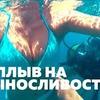 разместить рекламу в блоге maksimov_dy