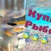 новое фото koshkakoroleva