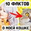 реклама на блоге elmofeo