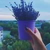 фото на странице Наталья Горбатова