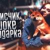 разместить рекламу в блоге Виктория Писарева