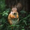 новое фото Андрей Свистунов