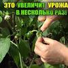 реклама на блоге urozhainyi_ogorod