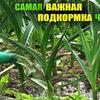 реклама в блоге urozhainyi_ogorod