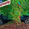 реклама у блоггера zheki444