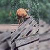лучшие фото Дарья Пушкарева