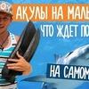 заказать рекламу у блогера svoimxodom