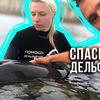 заказать рекламу у блоггера gleb_kornilov