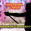 разместить рекламу в блоге sergeydolya
