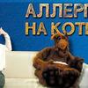заказать рекламу у блогера Ольга Жоголева