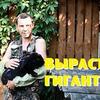 реклама на блоге Андрей Деревенский блокнот