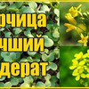 реклама на блоге Зеленая планета