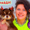 новое фото chihuasophieanny_magik