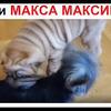 лучшие фото maxmaximov3587
