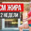 реклама на блоге katya_medushkina