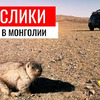новое фото Saiman.ip.team