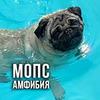 фотография Глеб Корнилов