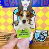 реклама в блоге Elli Di Pets