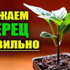 фото urozhainyi_ogorod