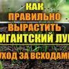 новое фото urozhainyi_ogorod