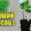 фотография urozhainyi_ogorod