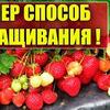 фото на странице urozhainyi_ogorod