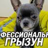 реклама в блоге Виталий Пиганов