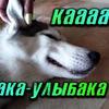 реклама у блогера Виталий Пиганов