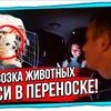 реклама на блоге Рафис Камалетдинов