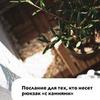 реклама на блоге Галия Бердникова