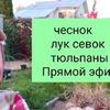 фото на странице Светлана sad_dlia_dushi