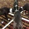 разместить рекламу в блоге veterinar.ot.boga