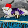 лучшие фото Sonya Cat