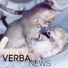 разместить рекламу в блоге Ирина Верба