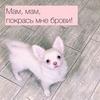 реклама в блоге Варвара Табу