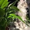 новое фото Алина Соколова