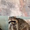 фото на странице raccoon.tema