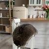 разместить рекламу в блоге raccoon.tema